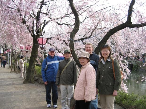 Cherry blossoms at Mishima Taisha