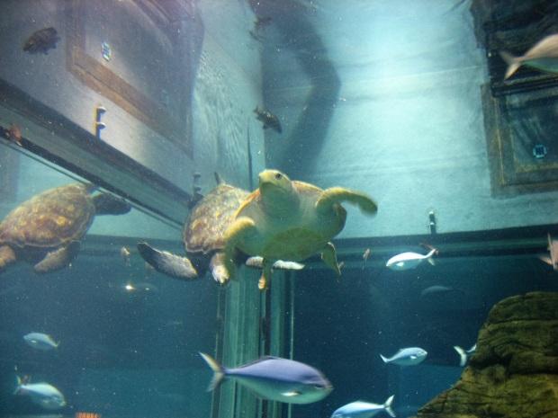 Osaka aquarium turtle